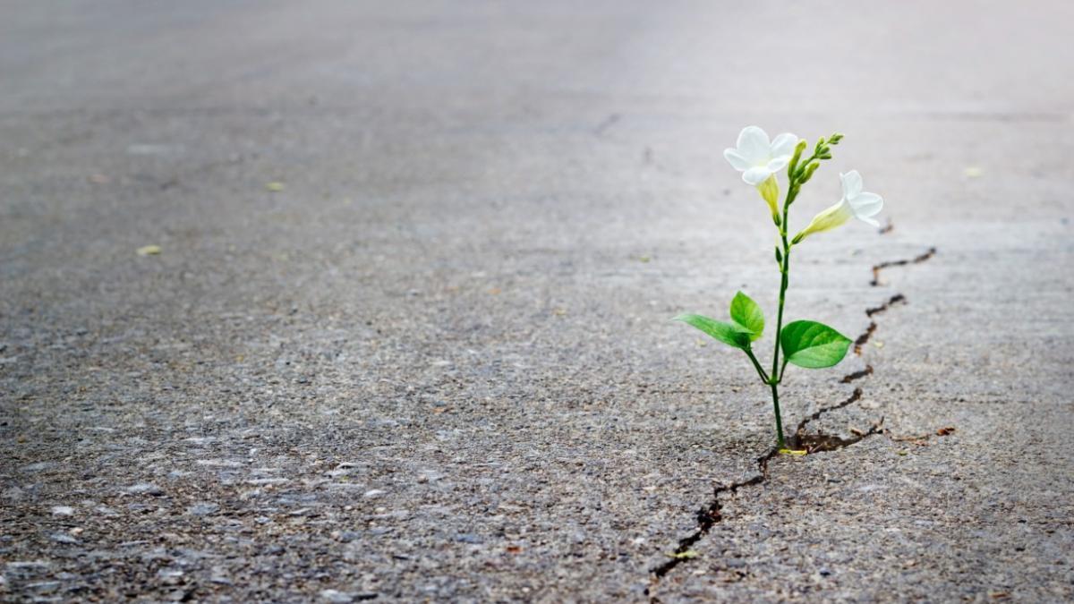 resiliencia que es resilencia definicion que es