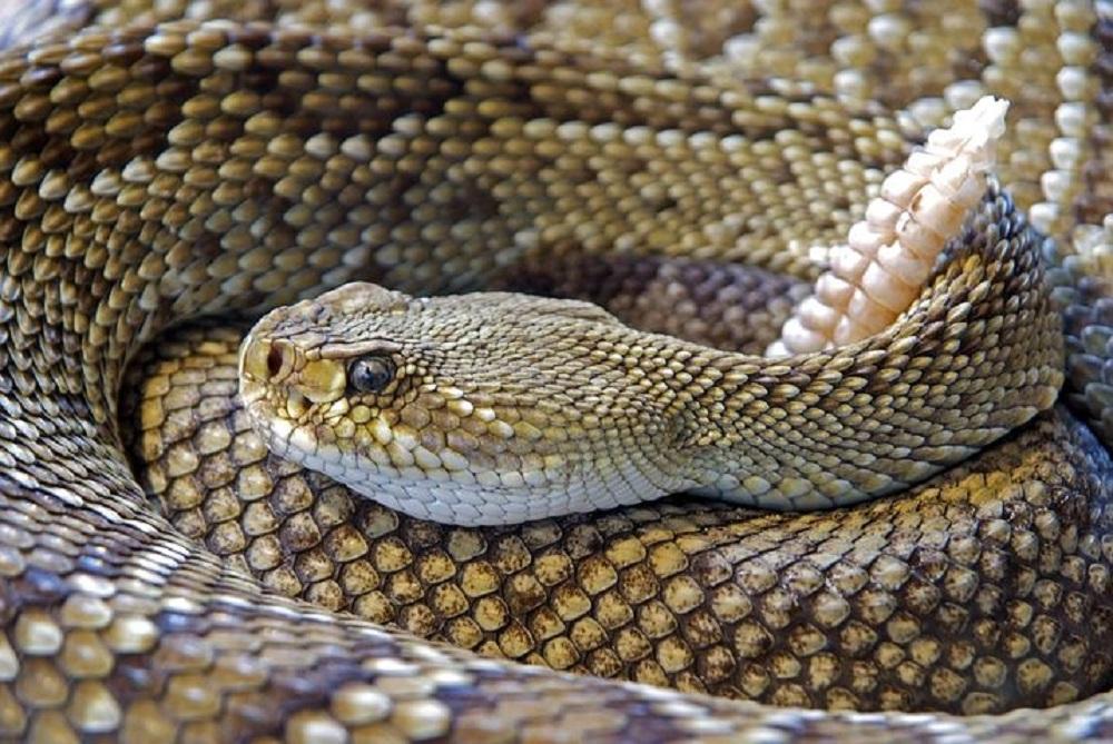 soñar con serpientes el significado de los sueños